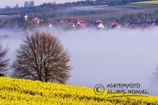 10261 - Small village and rape field in Middle Franconia at morning mist - Hesselberg region, Bavaria/Germany