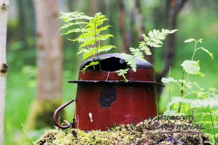 65276 – Fern in beech forest grows through discarded and rusted pot - Naturpark Altmuehltal, Bavaria/Germany