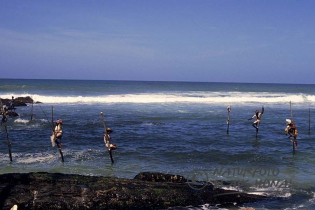 00347 - The stilt fishermen of Weligama perched on their poles above the Indian Ocean - Sri Lanka
