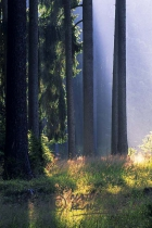 Wonderful impressions in the forest - Bavaria/Germany